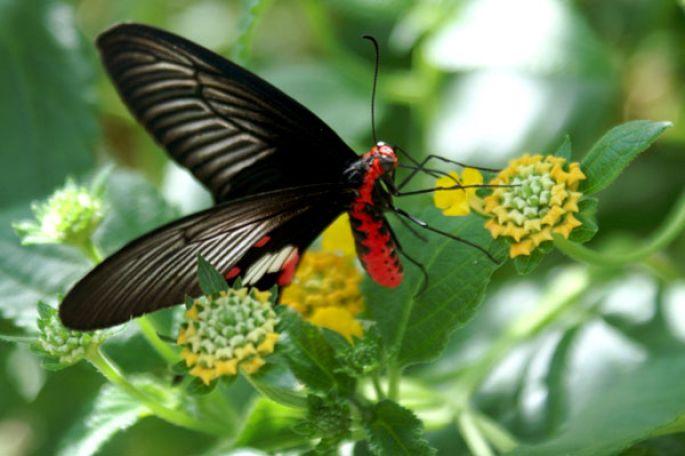 tous les papillons du monde au jardin des papillons saison 2008 hunawihr actu tourisme. Black Bedroom Furniture Sets. Home Design Ideas