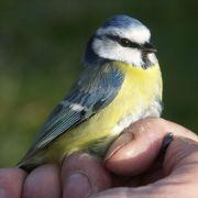 Cycle de formation sur les oiseaux