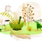 Venez découvrir les plantes ! avec Brin d\'herbe