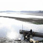 Découverte des poissons de nos étangs