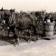 La vigne et/ou les vignerons