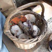 Sortie Nature : découverte des champignons dans la forêt