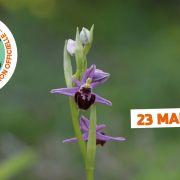 A la découverte des Orchidées sauvages des collines