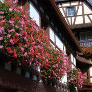 A la découverte de la ville d\'Obernai