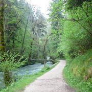 Bain de forêt enchanté