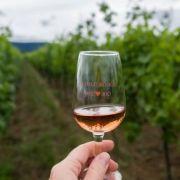 Alsace Ecotourisme - La vigne patrimoine vivant