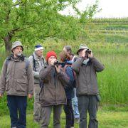 Découvertes naturalistes autour de Sasbach dans le Kaiserstuhl
