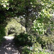 Promenade vespérale au Jardin botanique du col de Saverne