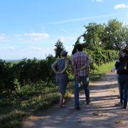 Alsace Écotourisme - Le vignoble aux 5 sens