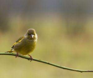 Les oiseaux parlent aux oiseaux