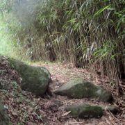 Introduction au chemin bouddhiste