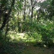 Bain de forêt en-chanté !