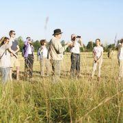 Alsace Ecotourisme : Le réveil des chevreuils