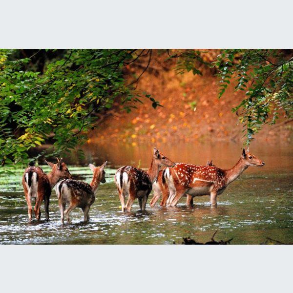 Nature d'Alsace. 68740 Hirtzfelden @ Hirtzfelden | Hirtzfelden | France