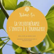 Bain de nature à l\'Orangerie - Sylvothérapie
