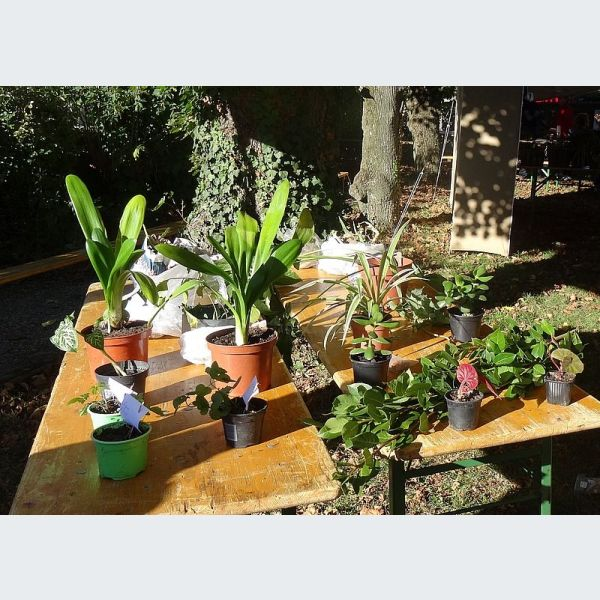 Agenda des manifestations jardin echange de graines for Calendrier jardin