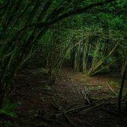 Der Wald / la forêt