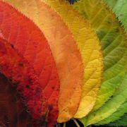 Ateliers d\'art thérapie : les saisons