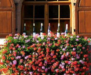 Dégustation de vin d\'Alsace