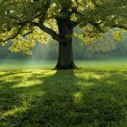 Sylvothérapie - L\'appel de la forêt