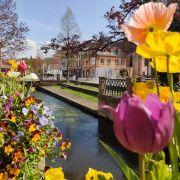 « Niederbronn-les-bains au fil des saisons » : une exposition photo haute en couleurs