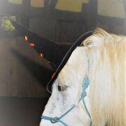 Pony Agilyty d\'HAlloween : s\'amuser, se déguiser lors d\'un parcours d\'aventure
