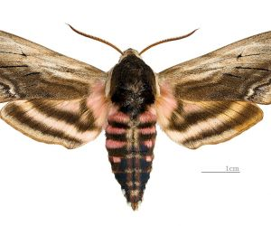 À la découverte des insectes locaux