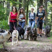 Balade avec les chiens au Ballon d\'Alsace