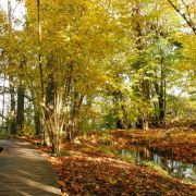 Exposition Bois nature, photos et sculptures