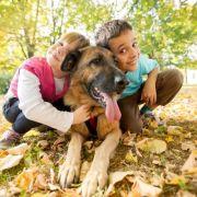 Les relations entre l\'enfant et le chien