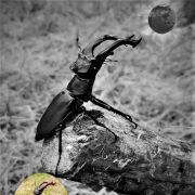 Insectes, shooting en Alsace