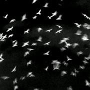 Projection de l'œuvre cinématographique de Silvi Simon, Filmatruc à verre n°2, Oiseaux.