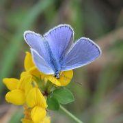 Mardi du Parc : Projection du film « Les papillons du massif vosgien »