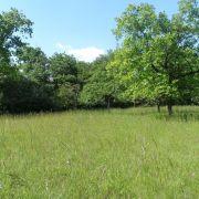 Chantier nature : entretien des lisières du Niederwald