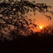 Amazonie et autres forêts tropicales