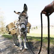 Randonnée bien accompagnée avec les ânes du Luppachhof