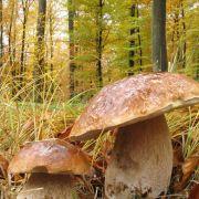 Le rôle mystérieux des champignons