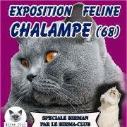 Exposition internationale feline