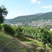 L\'évolution des paysages viticoles