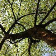 L\'odyssée des arbres