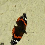 Papillons de rêve, rêves de papillons