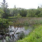 Chantier Nature : Entretien des berges d\'étangs