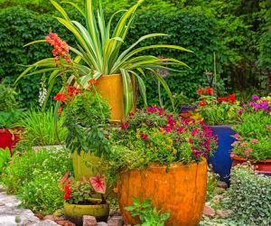 Histoires de jardins