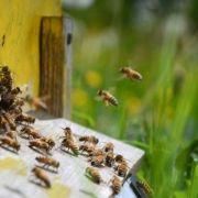 A la découverte d\'un rucher