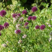Les fleurs de l\'été des Loechlefelsen