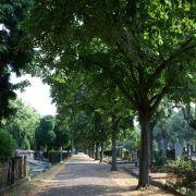 Visite guidée : le cimetière central