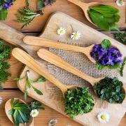 Week-end des prés à l\'assiette : plantes sauvages comestibles