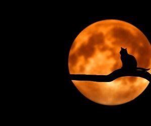 Les Nuits de la Sorcière