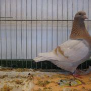 Exposition avicole à Zillisheim