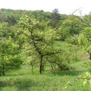 Chantier Nature : entretien des pelouses du Vollachermuhl